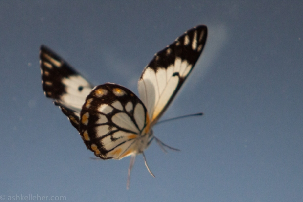 A random butterfly was battering the window in front of us.