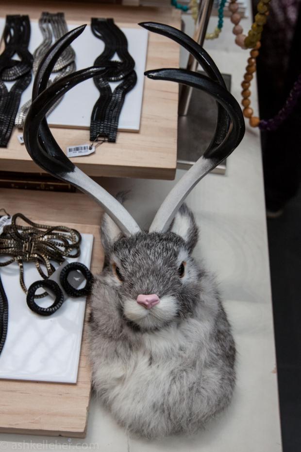 Aussie rabbits.