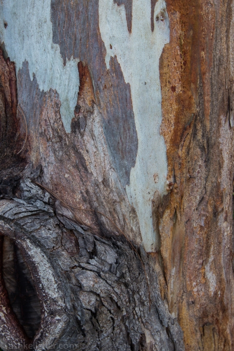 Some beautiful bark.