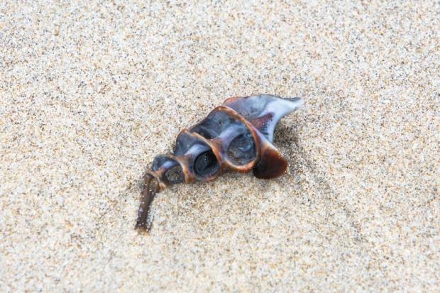 A nice shell.