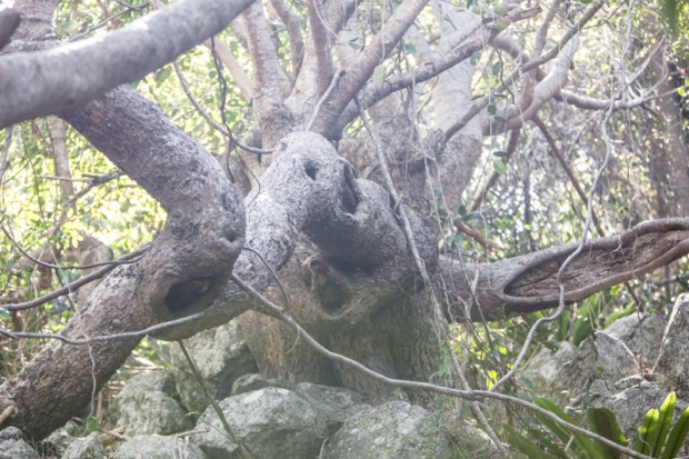 A rad tree.