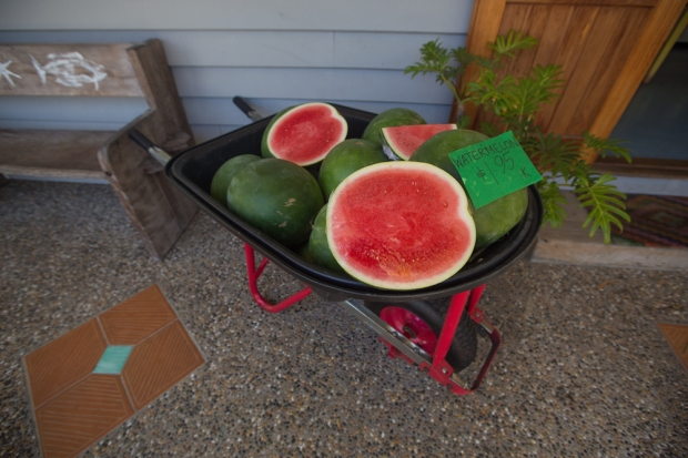 Watermelons...