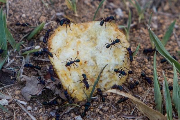 The Ants..