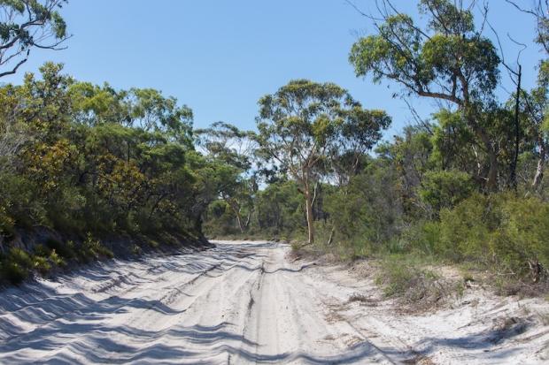 Bush track.