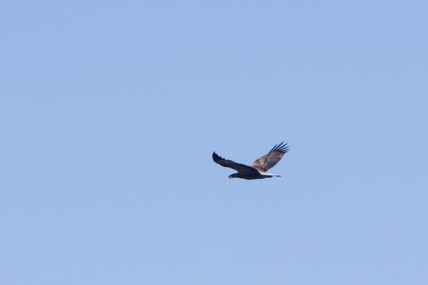 Free as a bird.